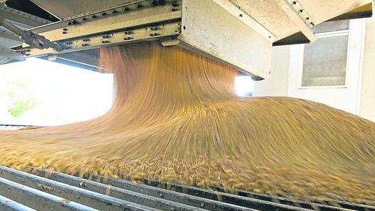 molienda-maiz