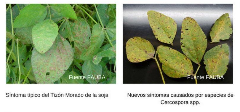 Fuente-FAUBA-copia
