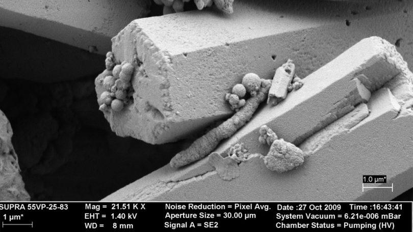 Microbialitos-en-microscopio-elctrónico.